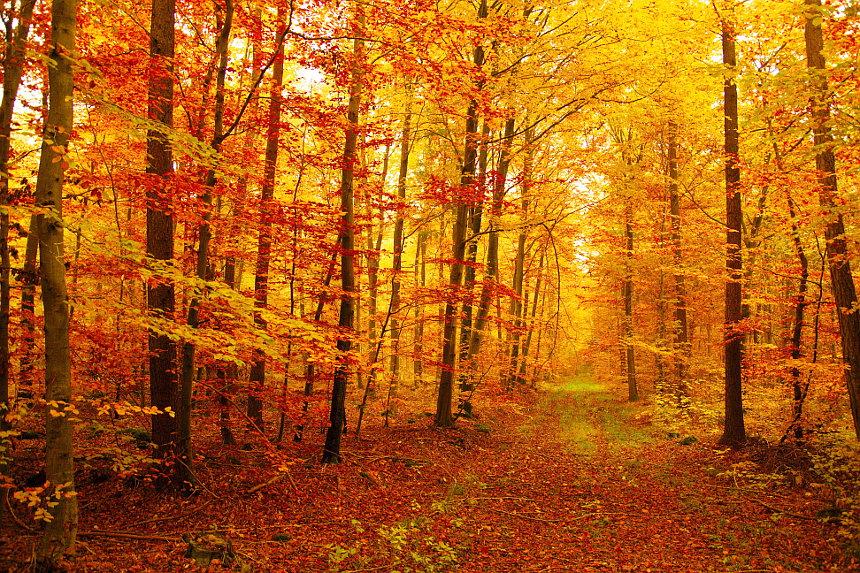 Foto - Herbsttag